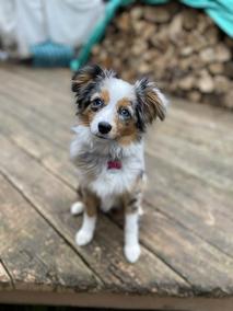 Kira @ 8 months old