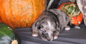 'Oakley'  @ 2 weeks old