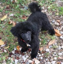 Zorro @ 15 weeks old