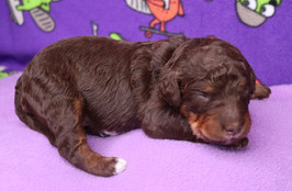 Dakota @ 10 days old