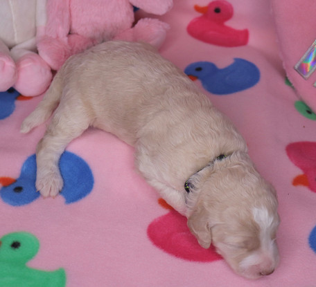 Brie @ 10 days old