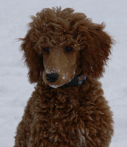Pretty Puppy Frank!