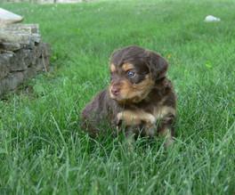 Twix @ 4 weeks old