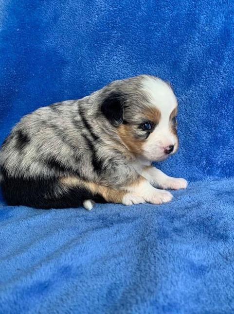 @ 3 weeks old