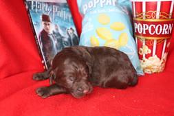 'Hermione @ 10 days old'