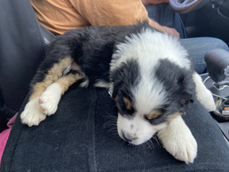Willow coming home