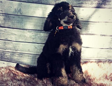 Puppy Jinx!