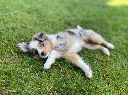 Kira @ 9 weeks old