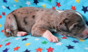 Blue @ 1 day old