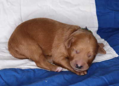 Snickerdoodle @ 5 days old