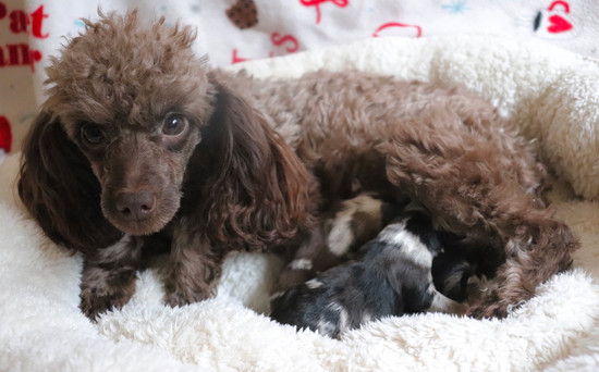 Minnow with her puppies Christmas 2020