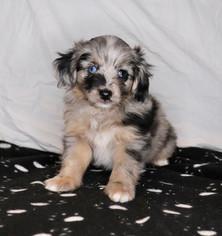 'Oakley' @ 6 weeks old