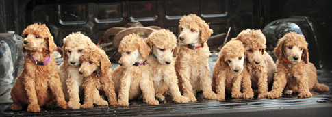 Frank's Puppies