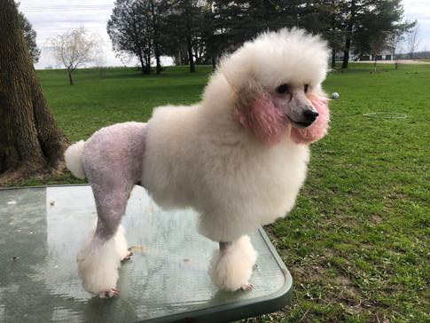 Izzy got a makeover!