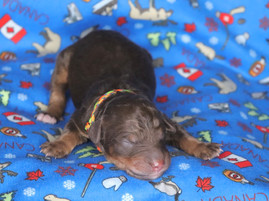Dakota @ 1 day old