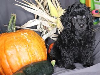 Zorro @ 8 weeks old