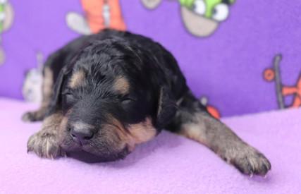 Sierra @ 10 days old