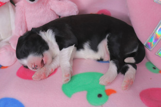 Pepper Jack @ 10 days old
