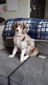 Cleo @ 10.5 weeks old