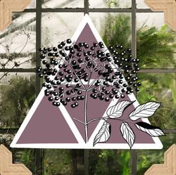 Elderberry by Tea&Scribbles