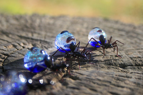 Stardust Honey-pot Ant