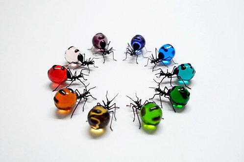 Honey-pot Ant