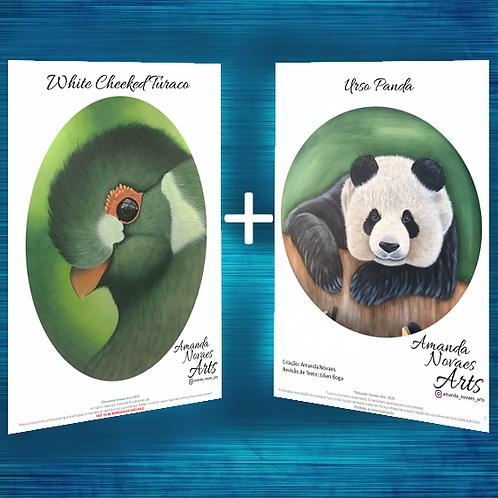 Pack - Panda + Turaco - Acrylic Painting -Eng-US