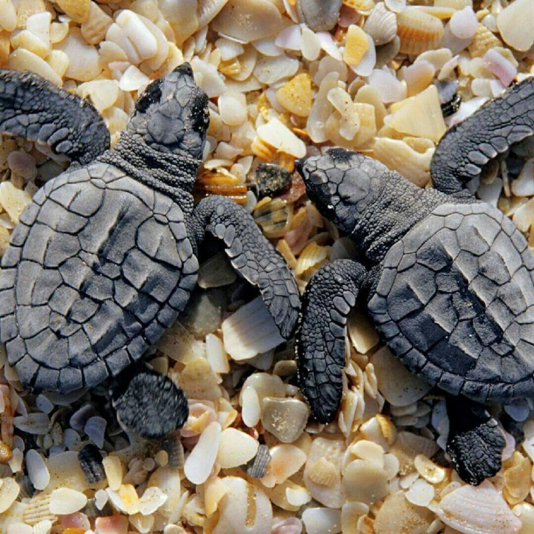 turtles 2018 j