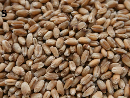 The Rise in Popularity of Ancient Grains