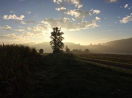 Domaine La Barbe in de ochtend