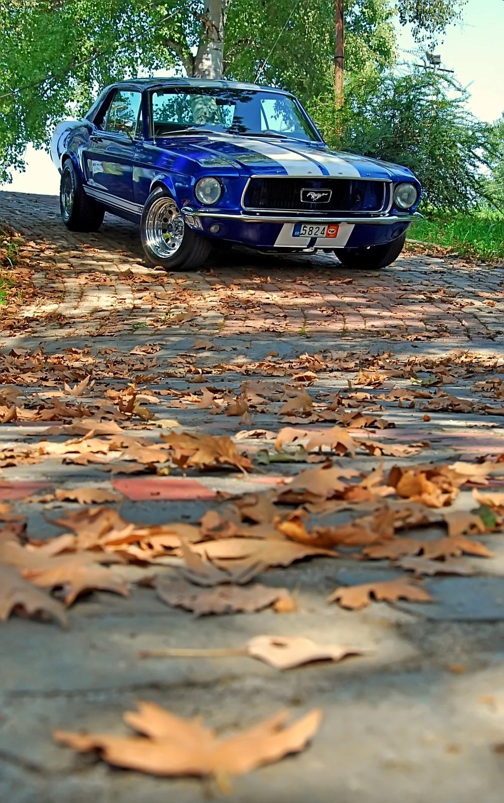 1968 Ford Mustang 289 (1).jpg