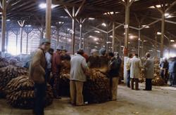 Tobacco Market, Asheville, NC (12-88)
