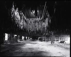 Tobacco Curing, Big Burley #2, Asheville, NC (10-82)