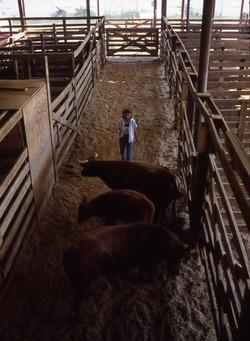 WNC Livestock Market  #2 (9-88)