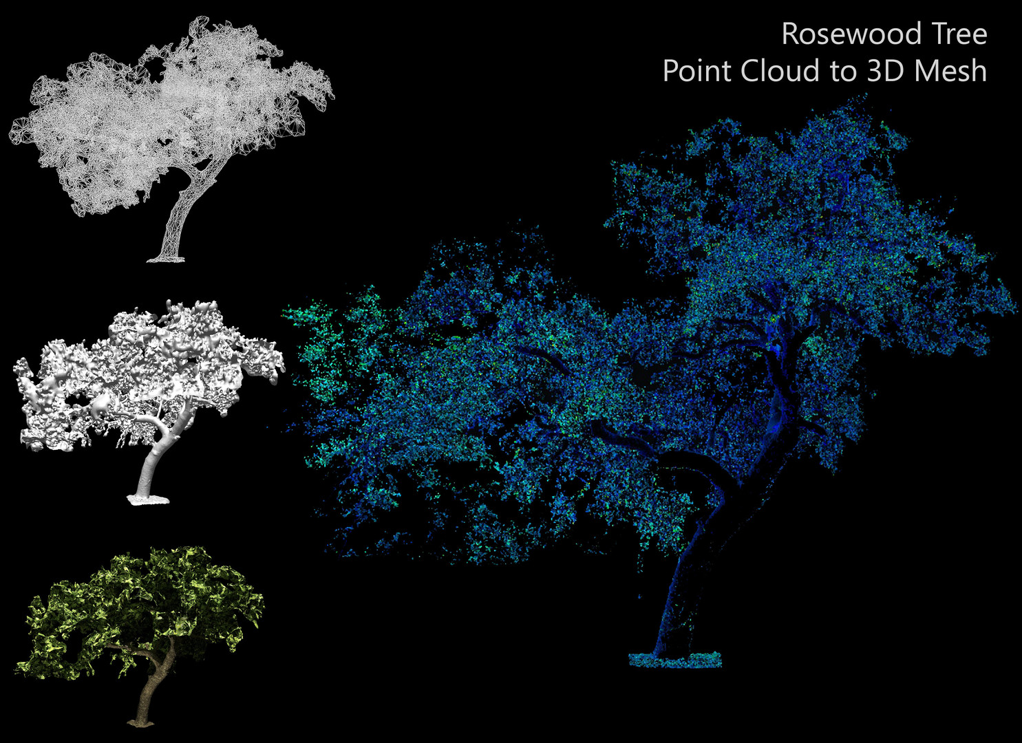 Laser scanning isn't just for buildings. Shown here is a scan of a protected rosewood tree. This tree was obstructing the construction of an edition to a facility. The point cloud provided the data required to construct around the tree without removal.