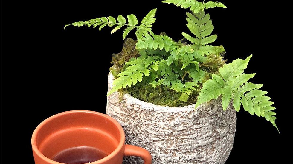 'Plant Lady' mug