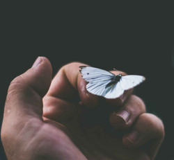 Crucial Pictures butterfly on hand