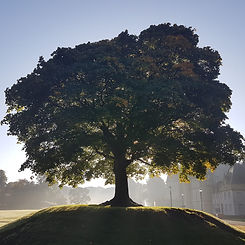 Callander House tree.jpg