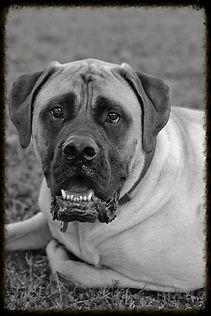 Dog boarding, Sterling, VA