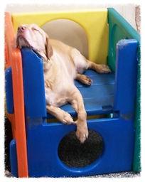 overnight dog boarding