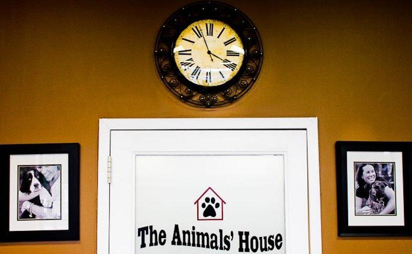 The Animals' House, dog daycare, dog boarding and dog training