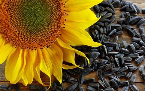 semena-podsolnechnika-polza-6.jpg