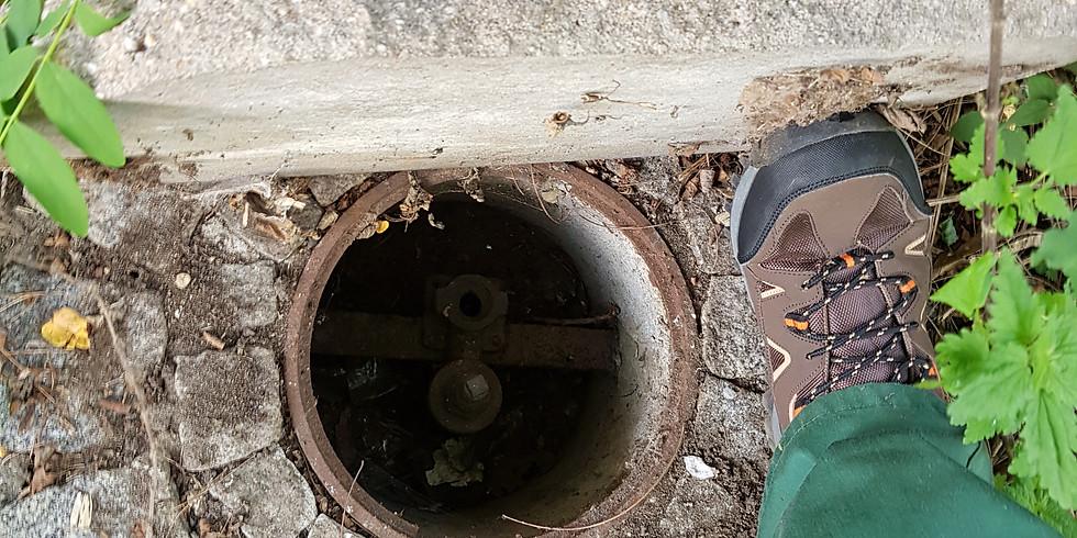 25.9. die 36. MITMACH - Aktion Bewässerung & Grünpflege für die Waldstraße