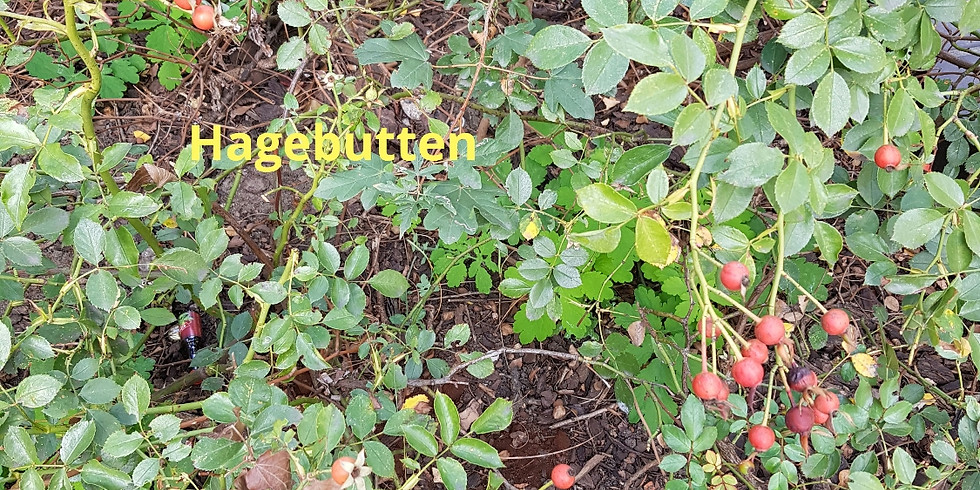 Sa. 3.10. Grünpflege in der Waldstraße - schon ab 11 Uhr