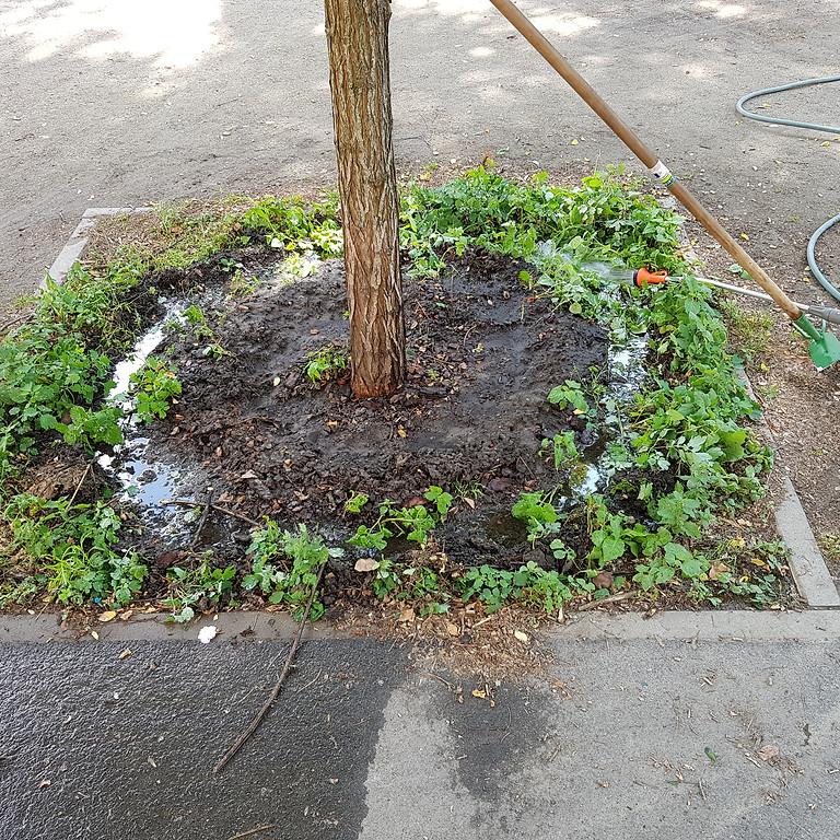 24.7.2021 die 13.Hydrantenbewässerungen mit Grünpflegearbeiten .8-12 Uhr