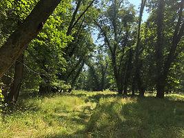 Patriot's Grove, Summer.jpg