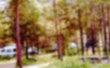 RVIA Photo  01.jpg
