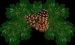 fir-pine_1.png