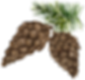 pinecone3.png
