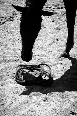 patrick horseman-11.jpg